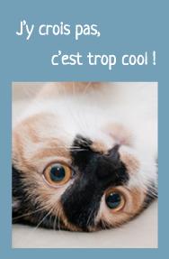 """Photo zoom tête d'un chat heureux sur le dos. """"J'y crois pas, c'est trop cool !"""""""