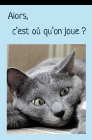 """Photo de la tête d'un chat qui joue """"Alors, c'est où qu'on joue ?"""""""