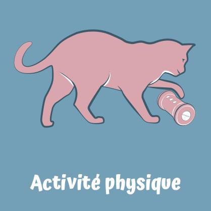 Pipolino permet une activité physique pour le chat